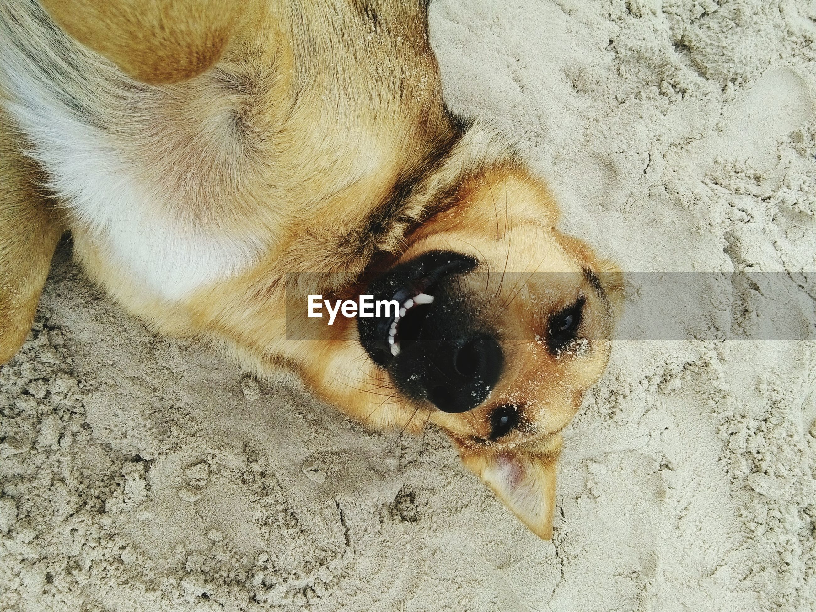 close-up, animal themes, one animal, high angle view, no people, animals in the wild, sand, textured, day, outdoors, nature, sea life, undersea