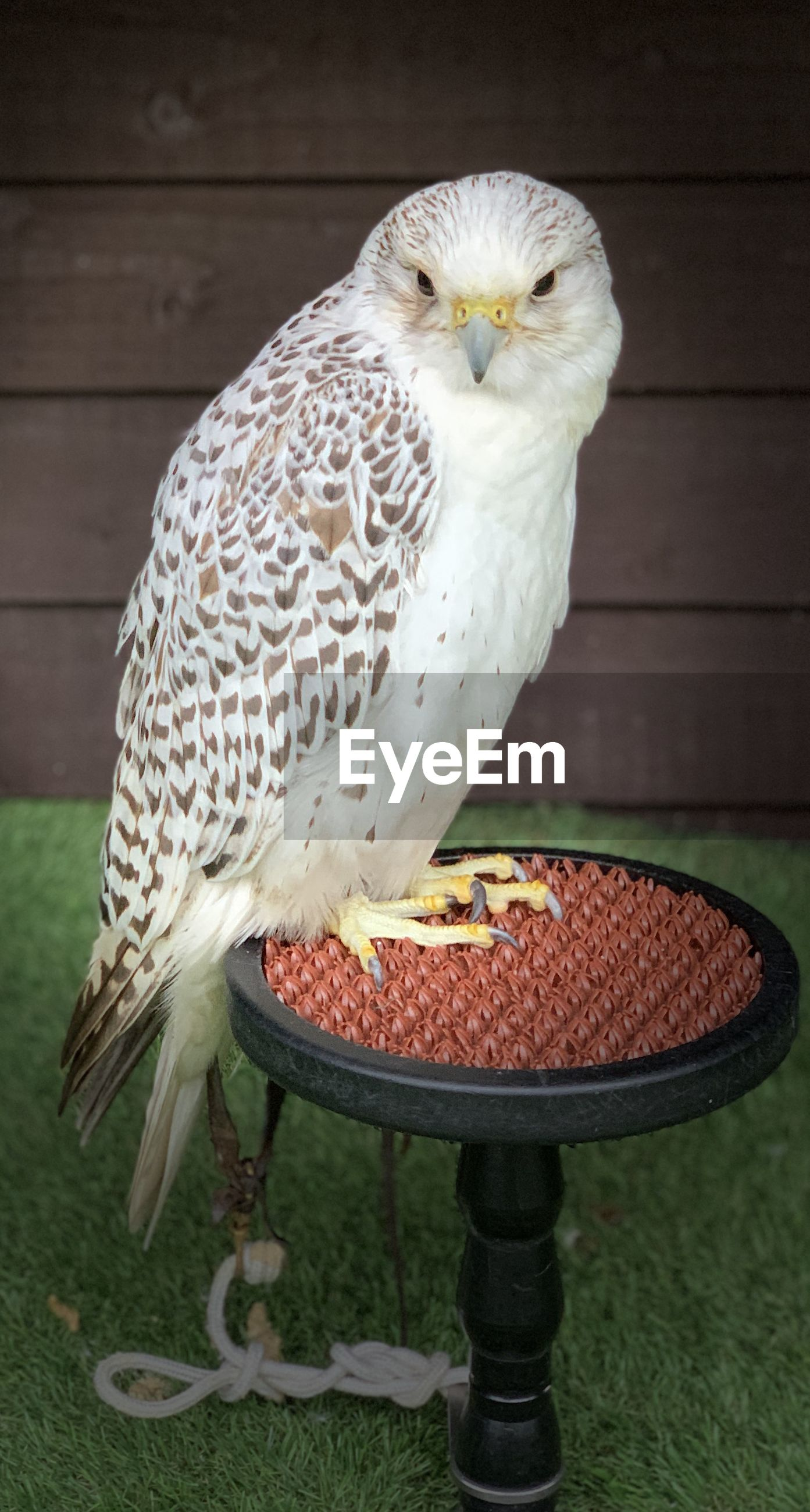 Close-up of owl perching on table