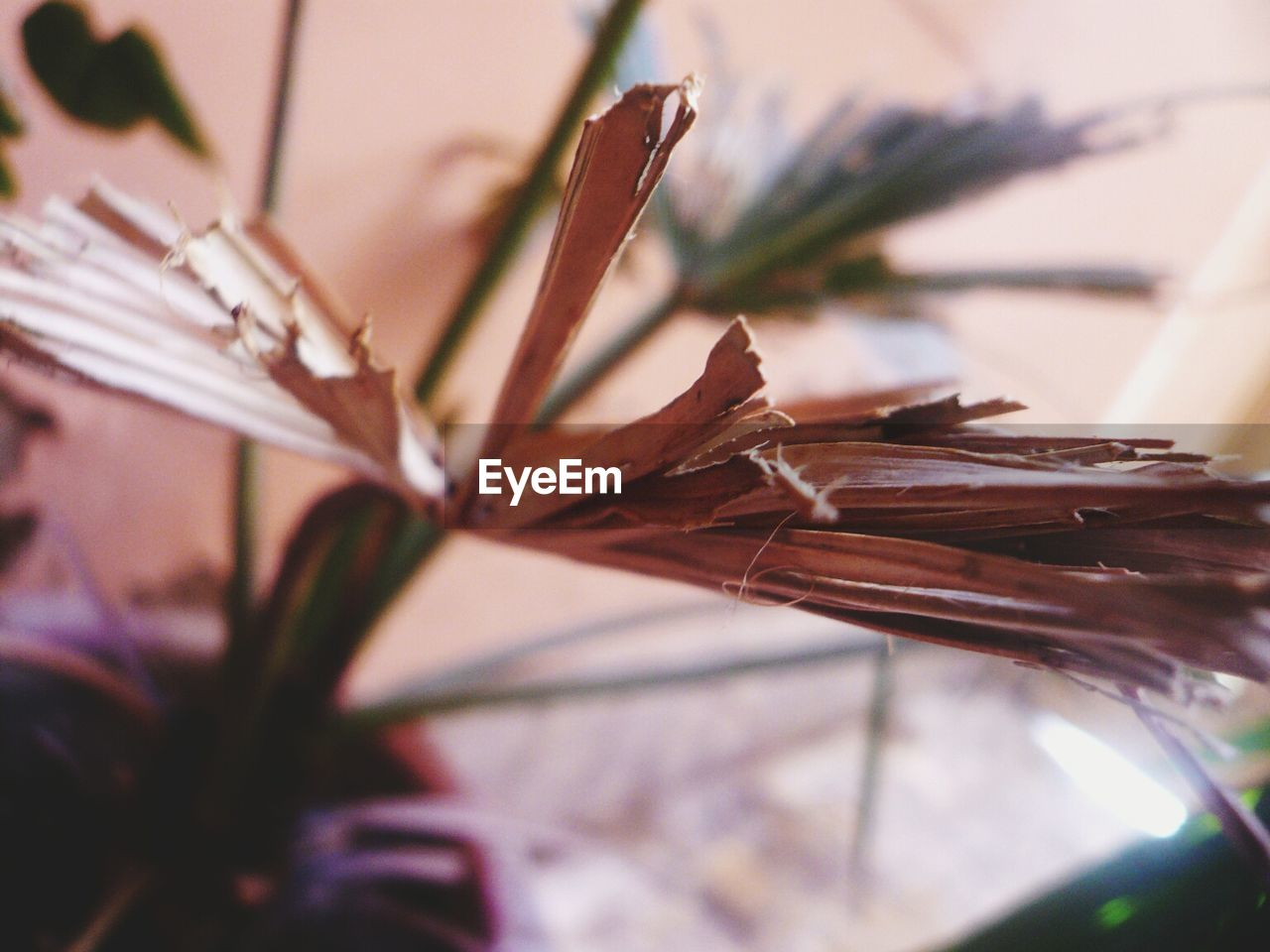selective focus, close-up, no people, nature, plant, growth, day, outdoors, beauty in nature