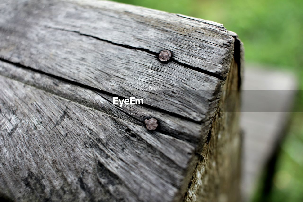 wood - material, textured, selective focus, close-up, no people, rough, nail, day, tree, pattern, plank, wood, outdoors, cracked, nature, invertebrate, focus on foreground, metal, animals in the wild, animal, bark, wooden post