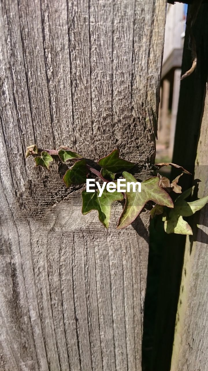wood - material, plant, close-up, plant part, no people, leaf, nature, growth, day, green color, outdoors, tree trunk, boundary, fence, trunk, barrier, focus on foreground, tree, animal wildlife, freshness
