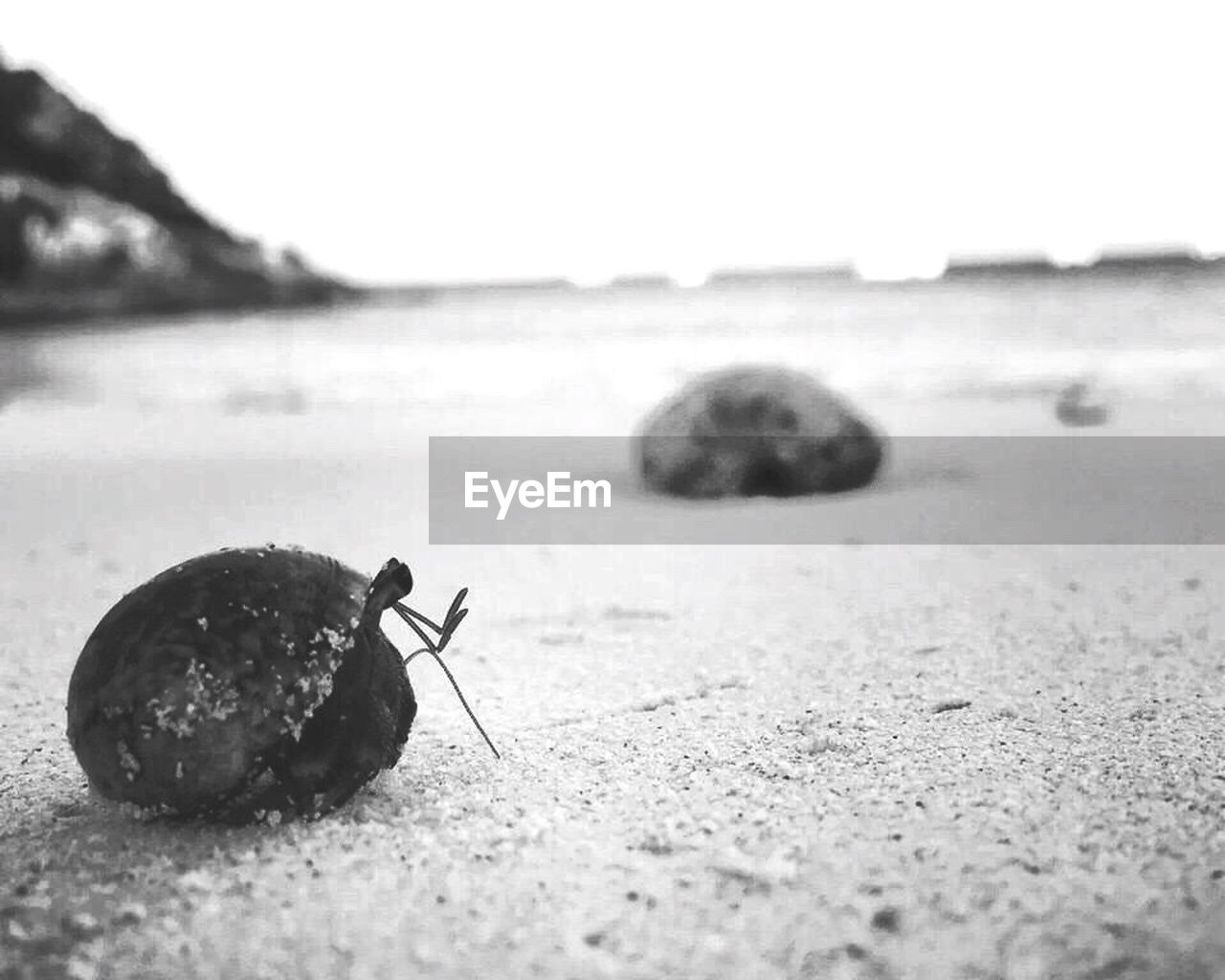 animal themes, one animal, animals in the wild, wildlife, insect, close-up, outdoors, no people, day, animal wildlife, beach, sand, nature, sky