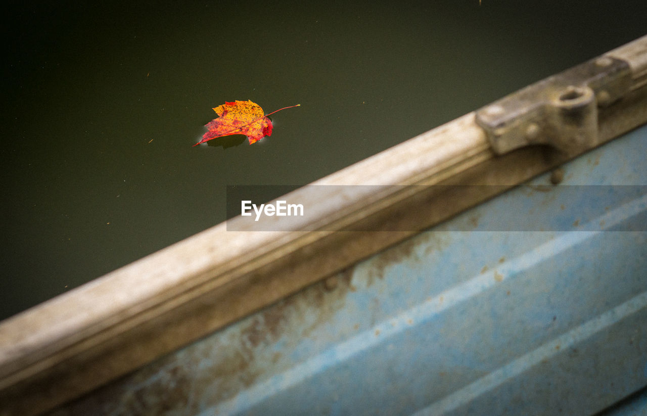 no people, nature, day, close-up, leaf, one animal, outdoors, plant part, animal, beauty in nature, focus on foreground, animal themes, selective focus, animal wildlife, animals in the wild, water, architecture, high angle view, built structure, floating on water