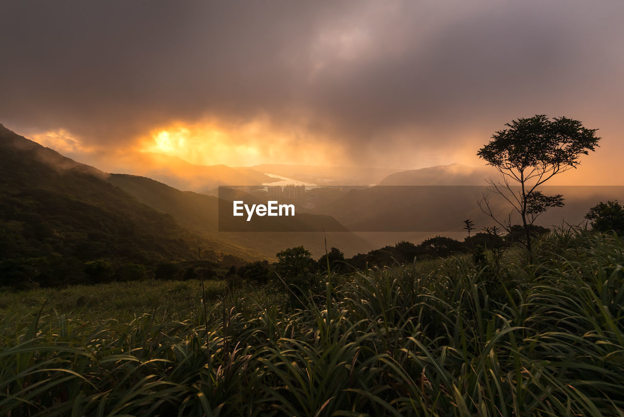 sky, beauty in nature, scenics - nature, plant, mountain, tranquil scene, tranquility, sunset, growth, environment, landscape, land, field, non-urban scene, nature, cloud - sky, no people, mountain range, tree, idyllic, outdoors