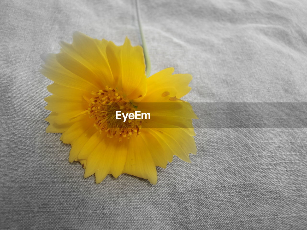 yellow, flower, petal, flower head, fragility, freshness, no people, beauty in nature, high angle view, close-up, nature, day, sunflower, outdoors
