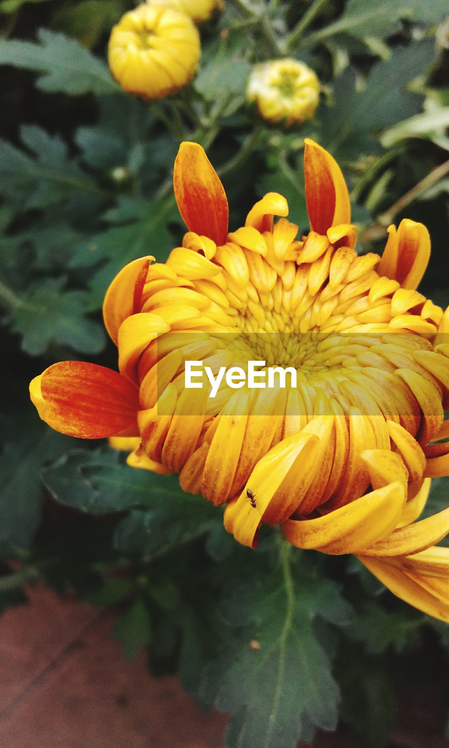 flower, petal, fragility, freshness, flower head, yellow, growth, close-up, beauty in nature, orange color, focus on foreground, nature, plant, blooming, single flower, in bloom, botany, blossom, no people, outdoors