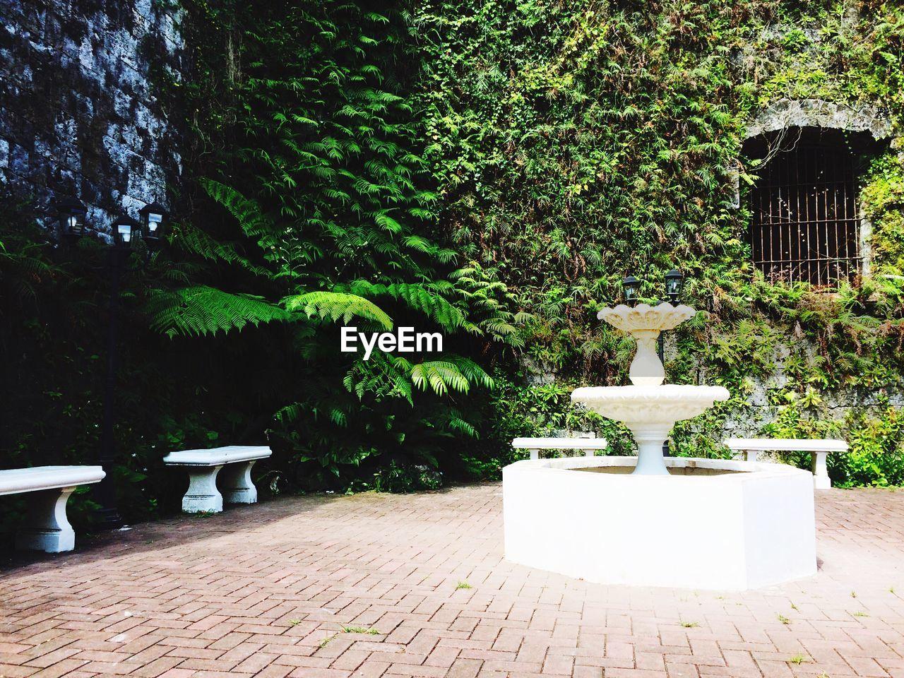PLANTS AGAINST TREES