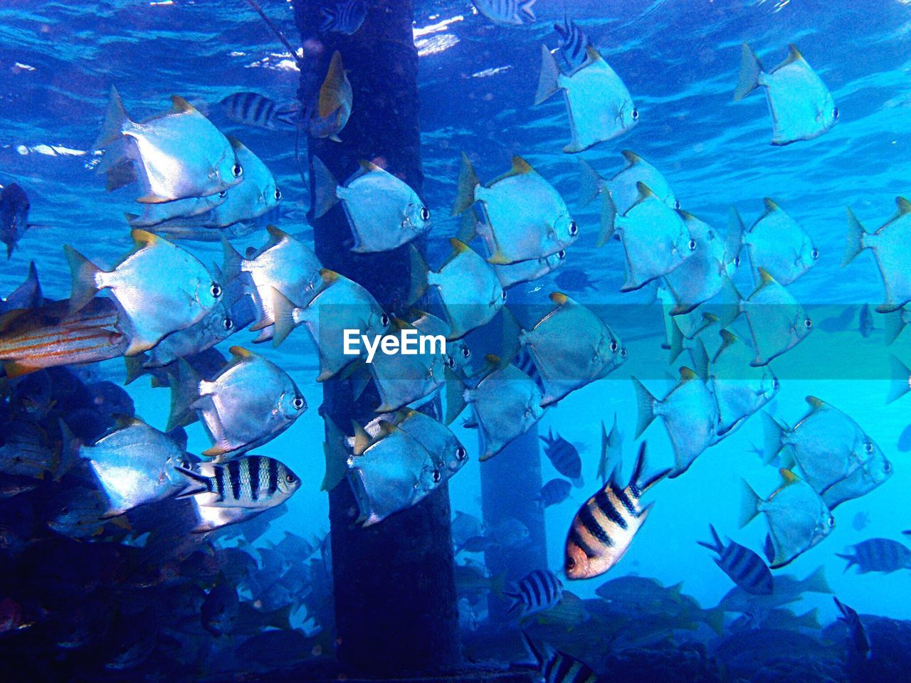 fish, blue, underwater, abundance, undersea, large group of animals, sea life, water, animals in the wild, no people, sea, animal themes, swimming, nature, day, outdoors