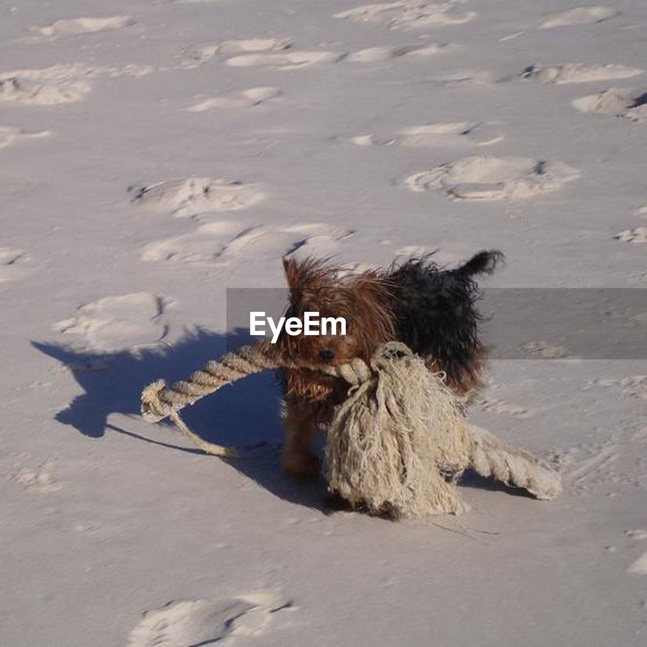 dog, sand, pets, beach, animal themes, domestic animals, one animal, mammal, outdoors, day, lying down, no people, nature