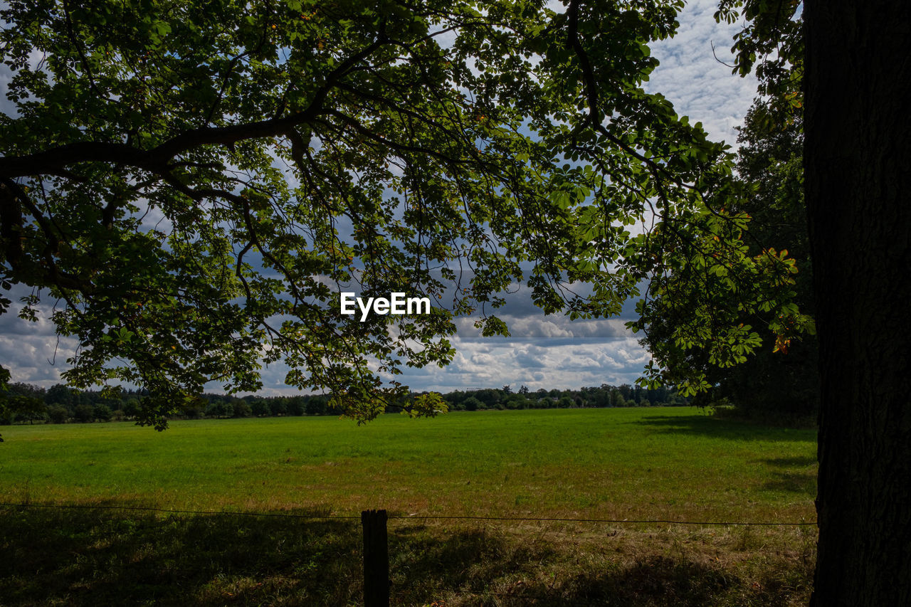tree, plant, land, grass, tranquility, field, sky, landscape, nature, growth, environment, beauty in nature, tranquil scene, green color, scenics - nature, no people, outdoors, cloud - sky, forest, day