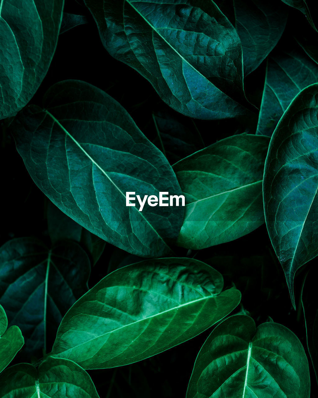 Closeup nature view of green leaf background, dark wallpaper concept.