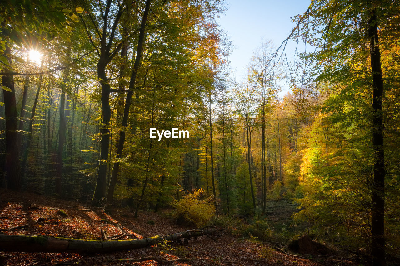 tree, forest, plant, land, beauty in nature, tranquility, growth, autumn, nature, tranquil scene, scenics - nature, change, day, no people, woodland, tree trunk, non-urban scene, trunk, sky, landscape, outdoors