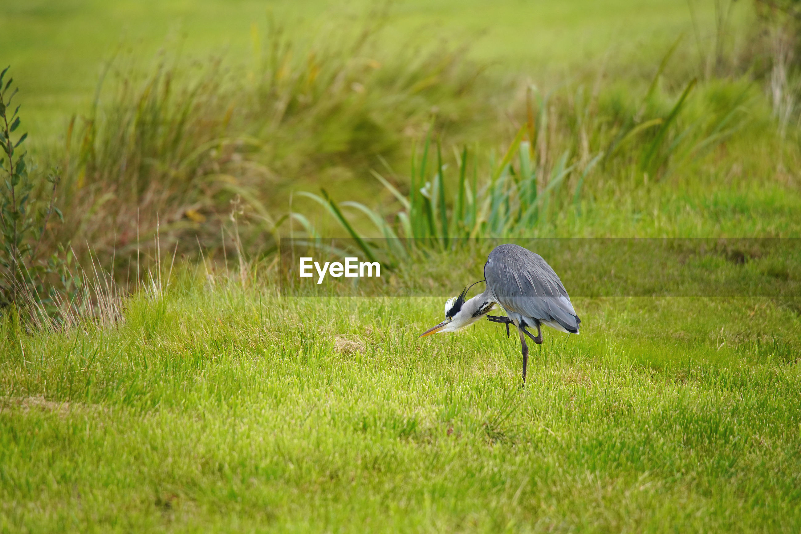 VIEW OF A BIRD ON FIELD