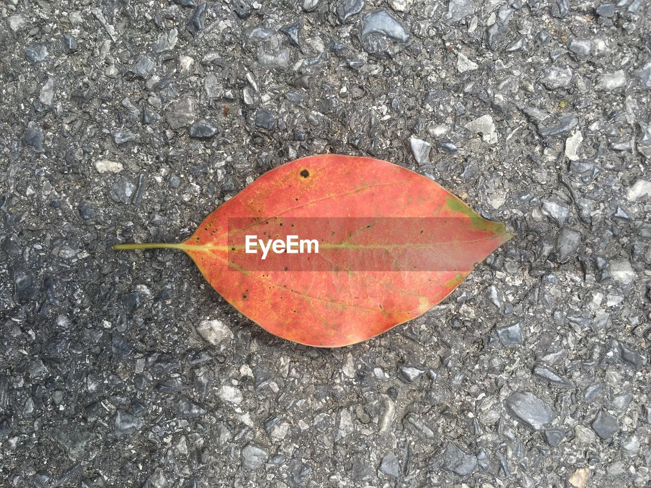 leaf, autumn, change, dry, high angle view, day, outdoors, nature, no people, directly above, maple, maple leaf, close-up, red, fragility, beauty in nature