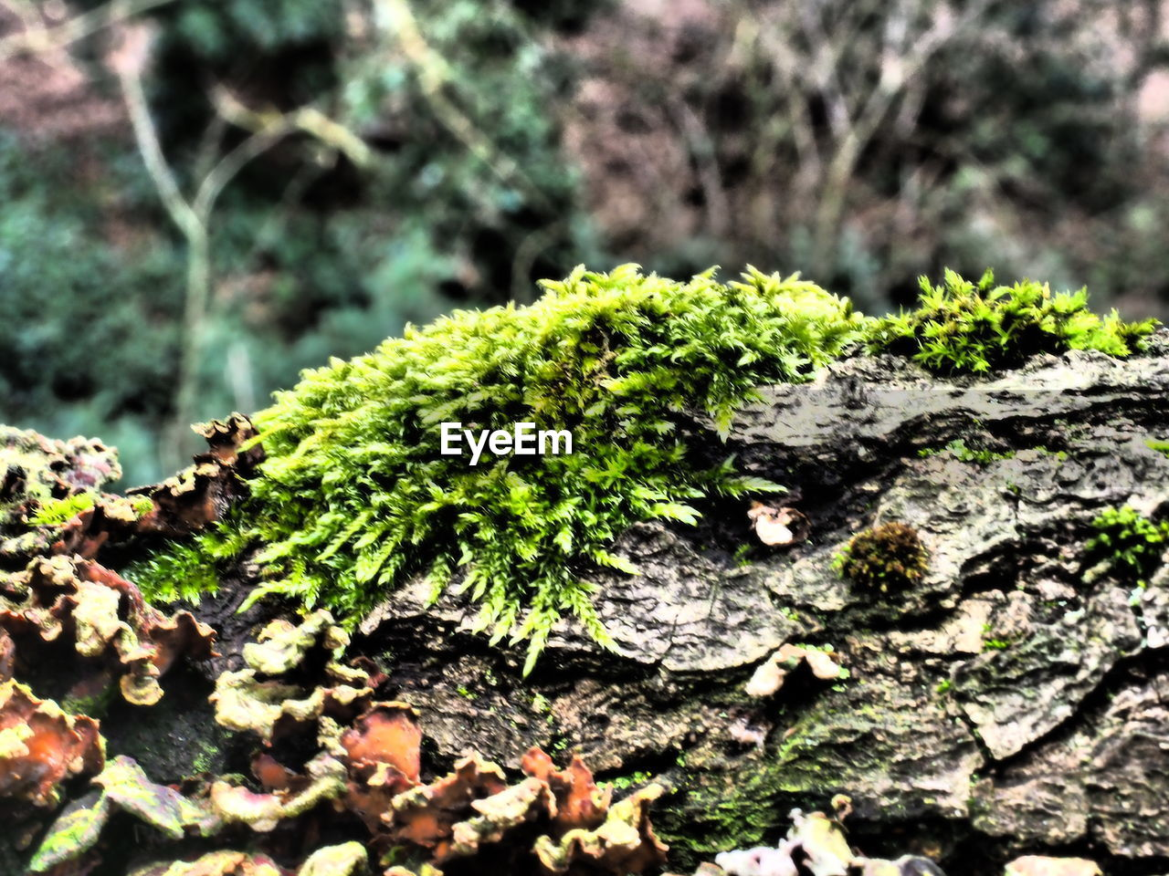 growth, nature, close-up, lichen, tree trunk, moss, no people, textured, day, fungus, outdoors, bark, plant, tree, beauty in nature, toadstool