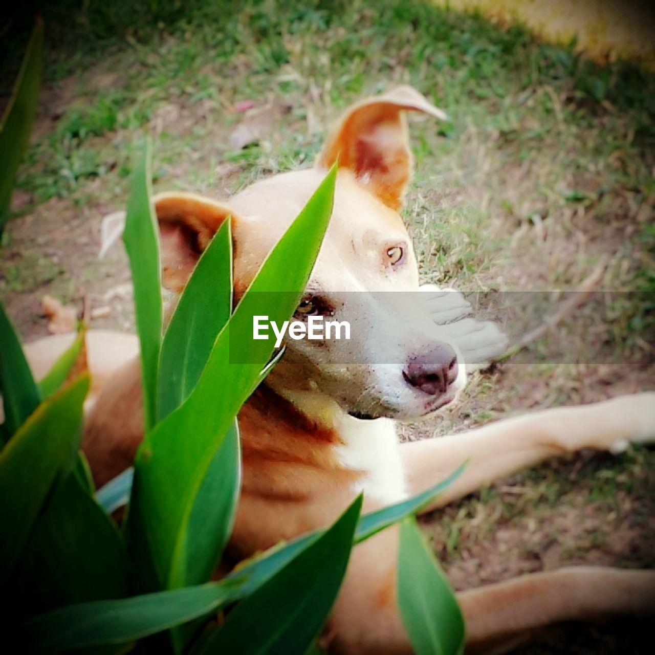 Portrait of dog sitting by plant in garden