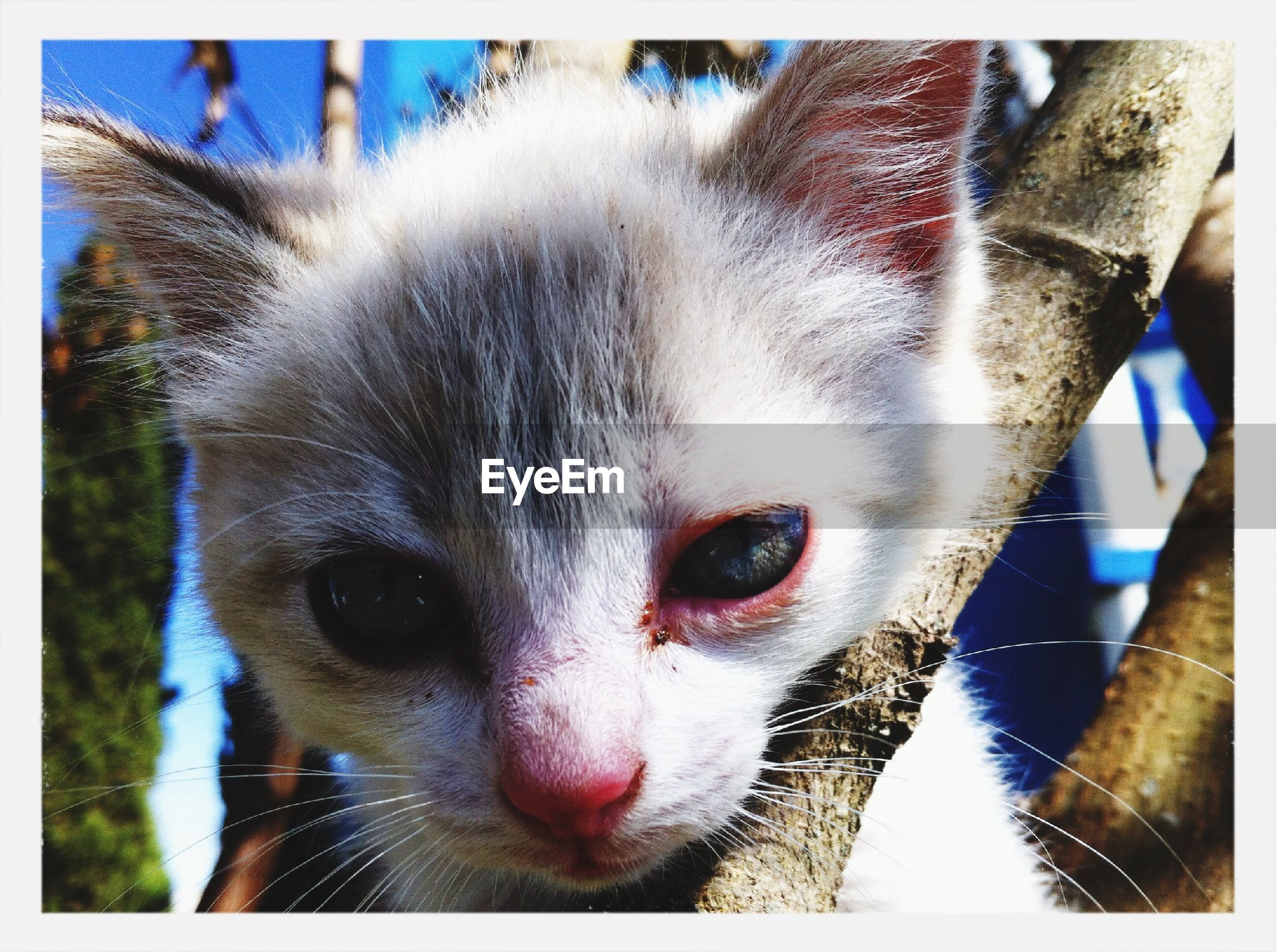 animal themes, one animal, pets, domestic animals, mammal, portrait, transfer print, looking at camera, close-up, auto post production filter, animal head, focus on foreground, day, domestic cat, dog, outdoors, front view, no people, whisker, part of