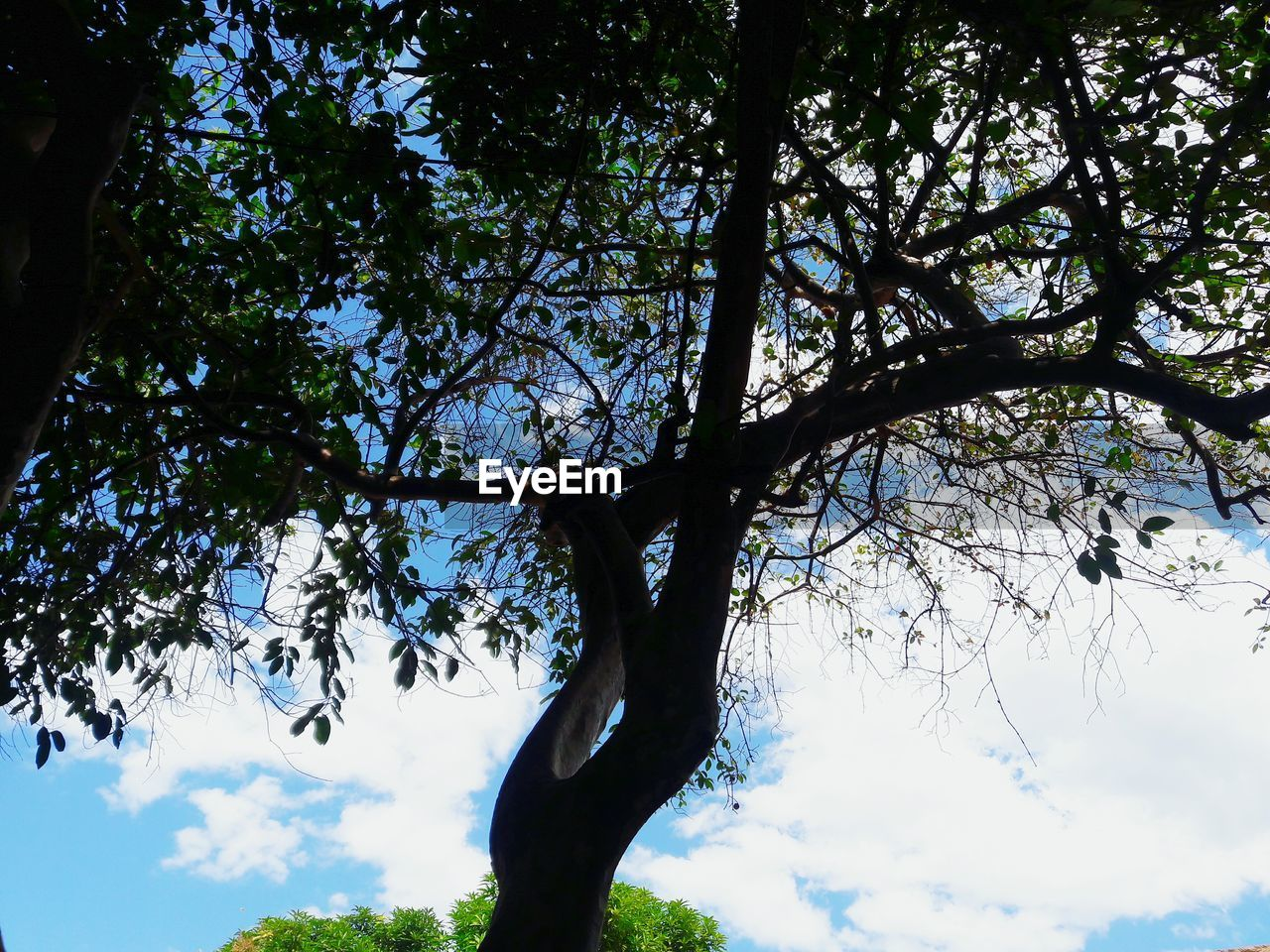 tree, low angle view, branch, nature, growth, tree trunk, beauty in nature, day, tranquility, sky, no people, outdoors, scenics, forest
