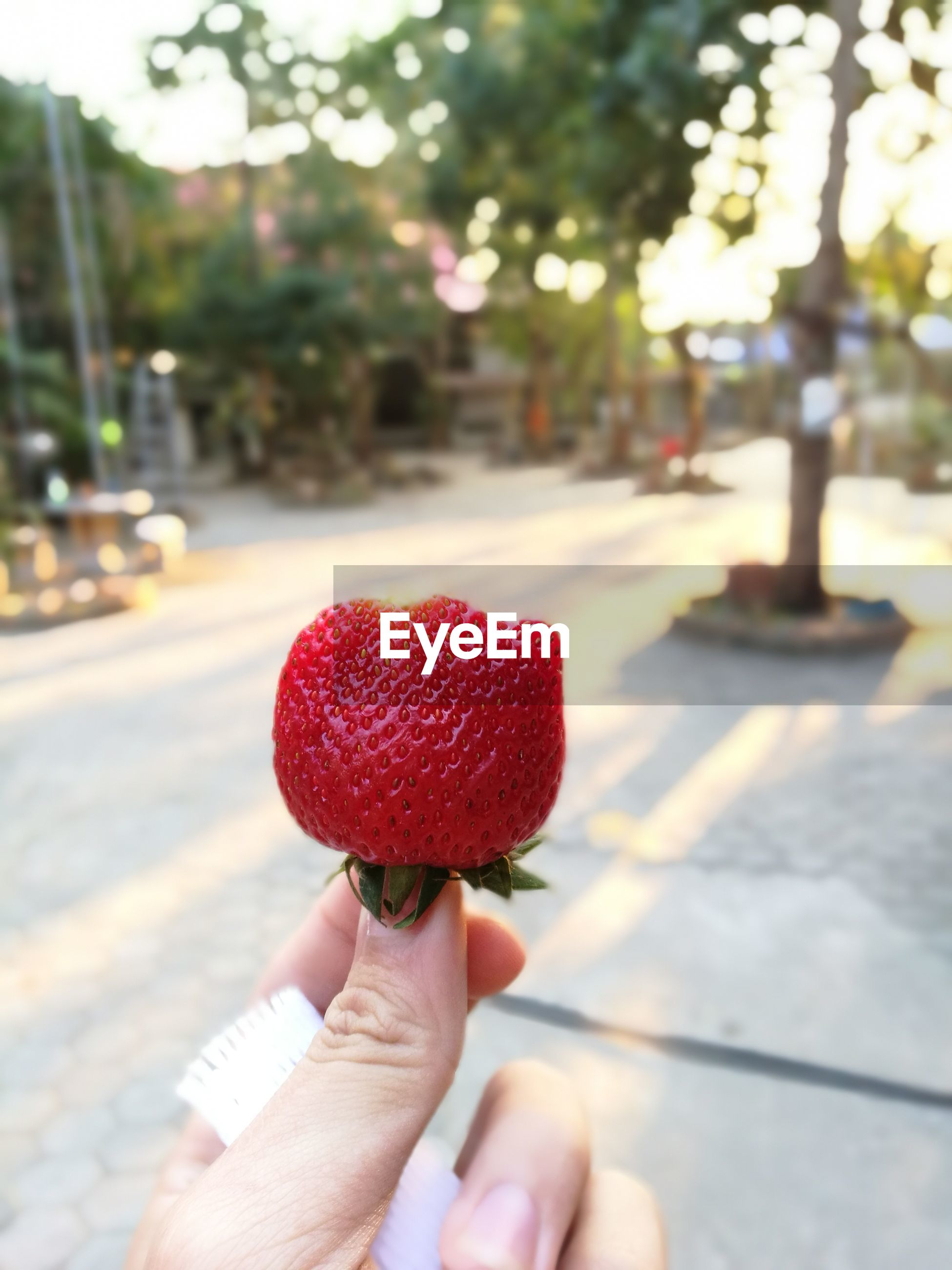 Cropped hand of woman holding strawberry