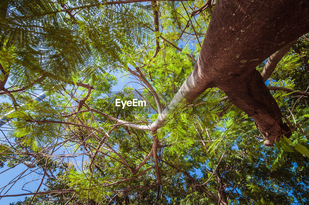 tree, plant, growth, tree trunk, trunk, branch, low angle view, green color, nature, beauty in nature, day, forest, tranquility, no people, land, plant part, outdoors, leaf, sunlight, tree canopy, directly below, rainforest