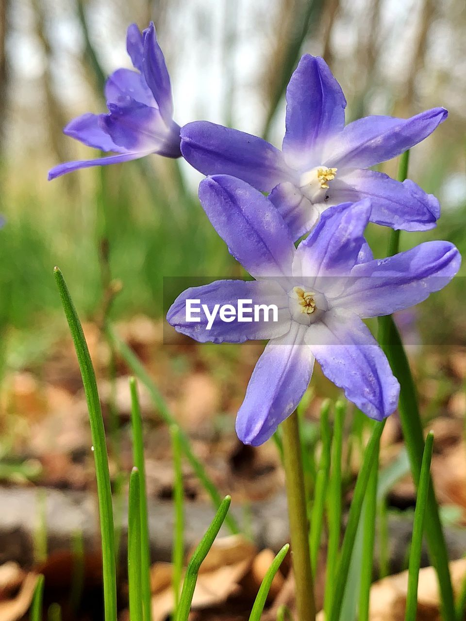 flowering plant, flower, plant, freshness, vulnerability, fragility, petal, beauty in nature, growth, purple, flower head, close-up, inflorescence, focus on foreground, nature, no people, day, botany, land, field, outdoors, crocus