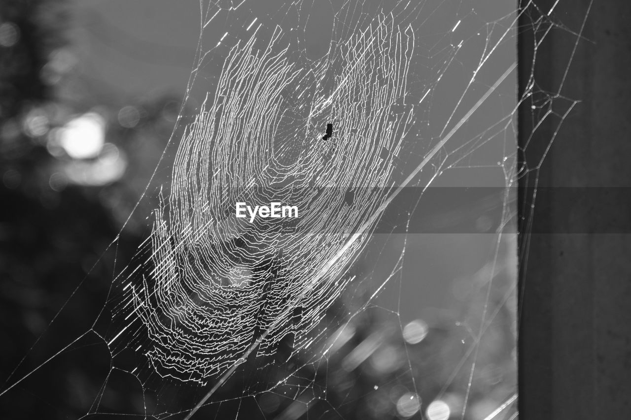 spider web, close-up, fragility, focus on foreground, spider, one animal, animal, animal themes, arachnid, vulnerability, invertebrate, no people, day, arthropod, nature, insect, animals in the wild, complexity, animal wildlife, intricacy, web, outdoors, dew