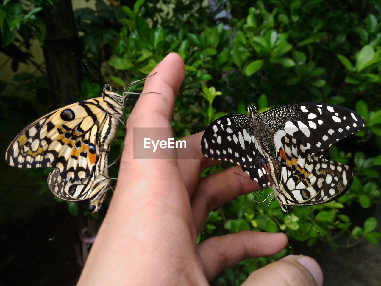 human hand, hand, butterfly - insect, human body part, animal wing, animal wildlife, insect, animal themes, invertebrate, animal, one person, body part, animals in the wild, real people, one animal, close-up, finger, human finger, beauty in nature, animal markings, butterfly, outdoors