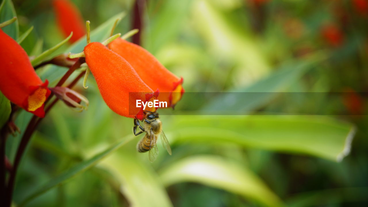 plant, animal wildlife, invertebrate, insect, animal themes, growth, orange color, animals in the wild, close-up, animal, red, one animal, selective focus, flowering plant, flower, no people, day, beauty in nature, freshness, focus on foreground, flower head, pollination, small