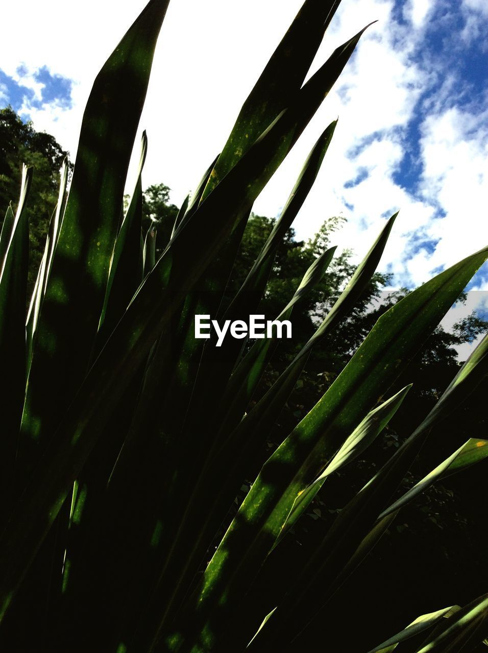 growth, nature, low angle view, sky, day, plant, outdoors, no people, tree, beauty in nature, close-up, freshness