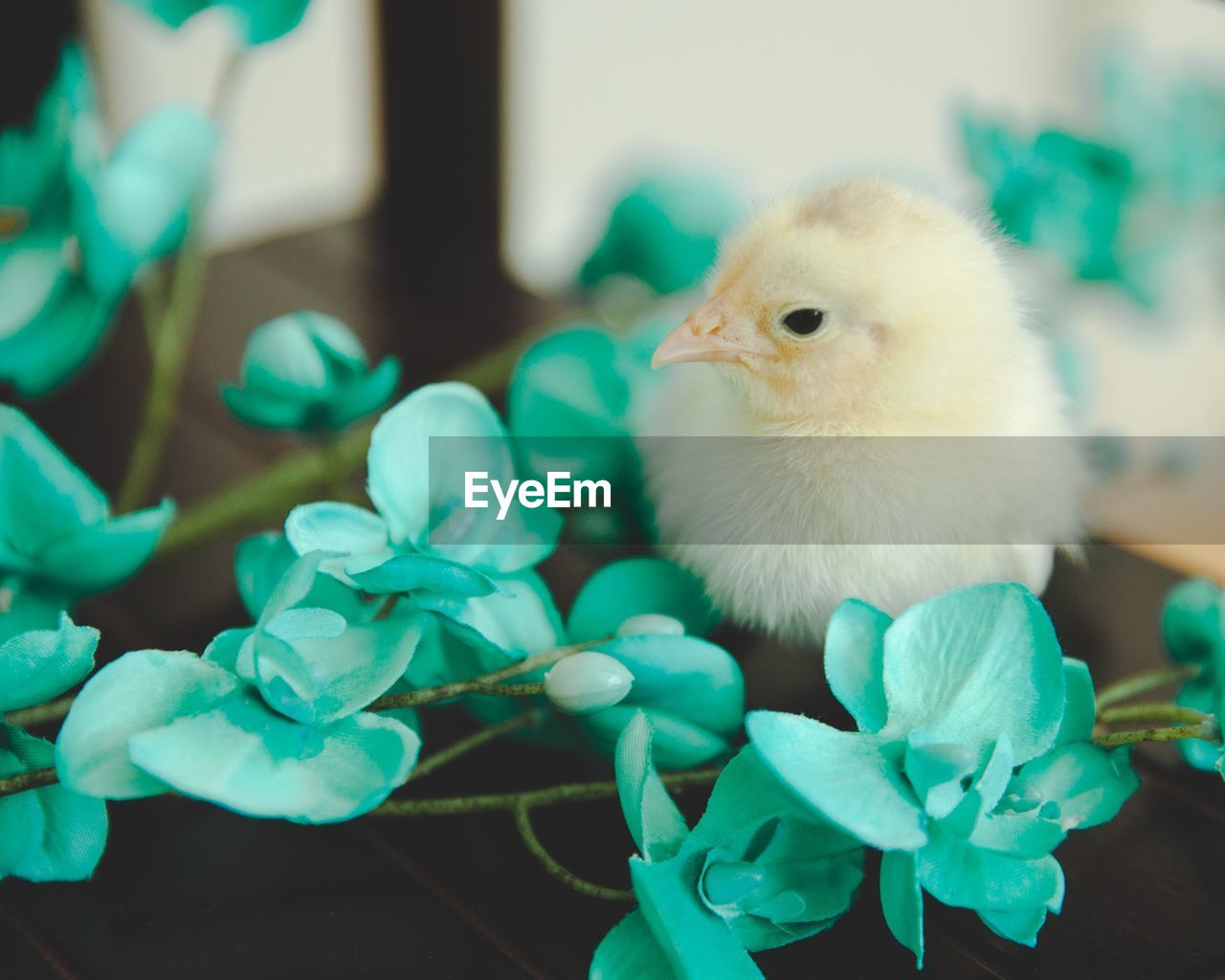 bird, animal themes, animal, vertebrate, young bird, close-up, one animal, focus on foreground, plant, no people, young animal, nature, domestic animals, chicken - bird, baby chicken, livestock, domestic, pets, day, green color