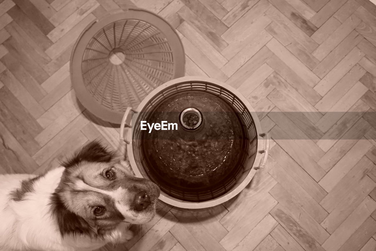 pets, dog, one animal, domestic animals, animal themes, mammal, indoors, no people, tire, day