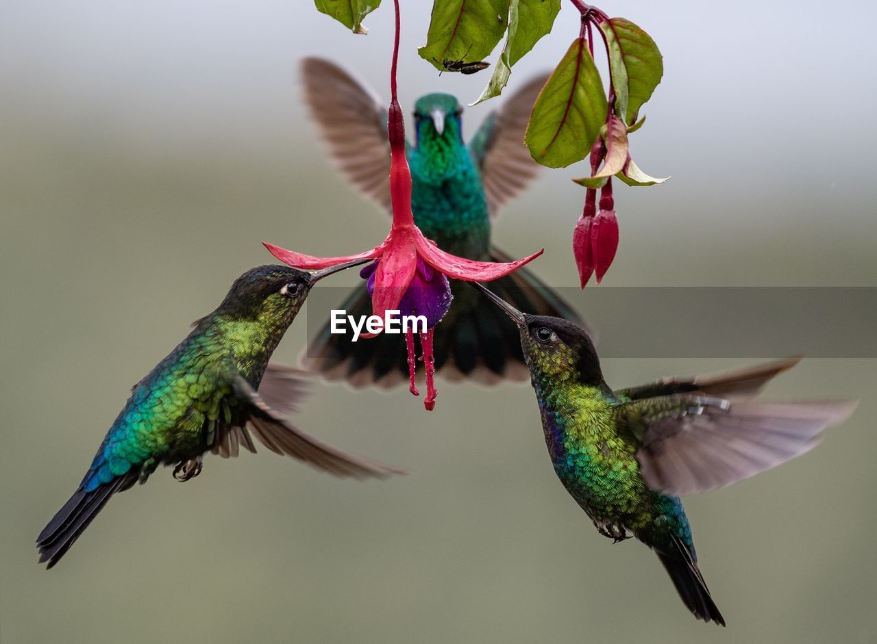 Close-up of birds eating pollen in flower
