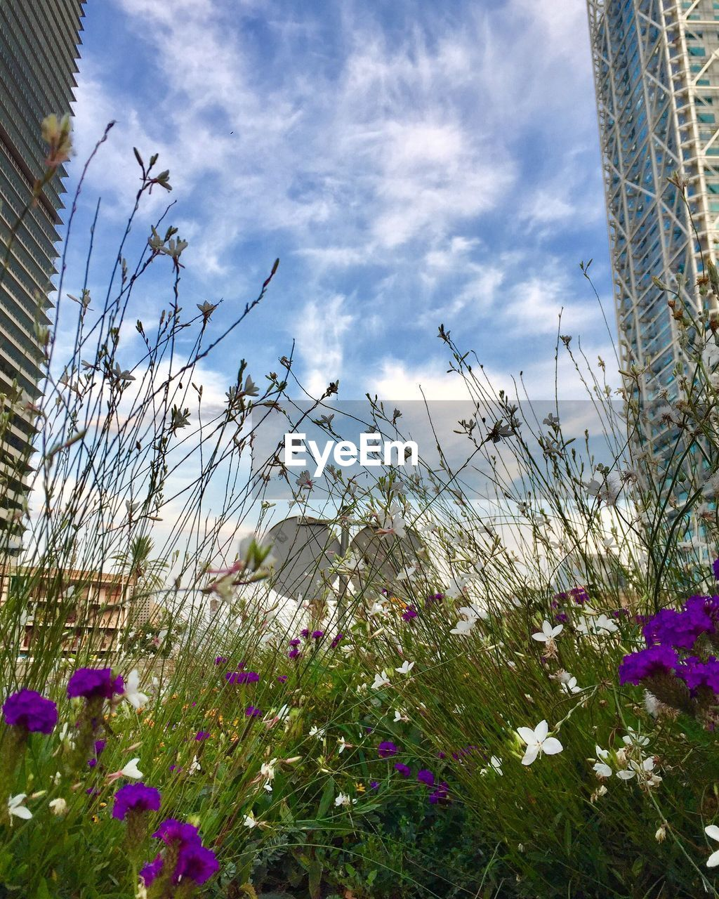 flower, sky, growth, cloud - sky, nature, plant, no people, day, beauty in nature, outdoors, fragility, low angle view, freshness, built structure, blooming, flower head, architecture