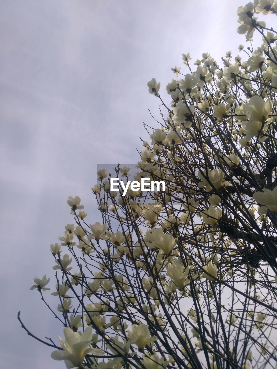 flower, nature, growth, beauty in nature, blossom, fragility, tree, branch, bright, springtime, spring, no people, low angle view, freshness, outdoors, day, close-up, sky