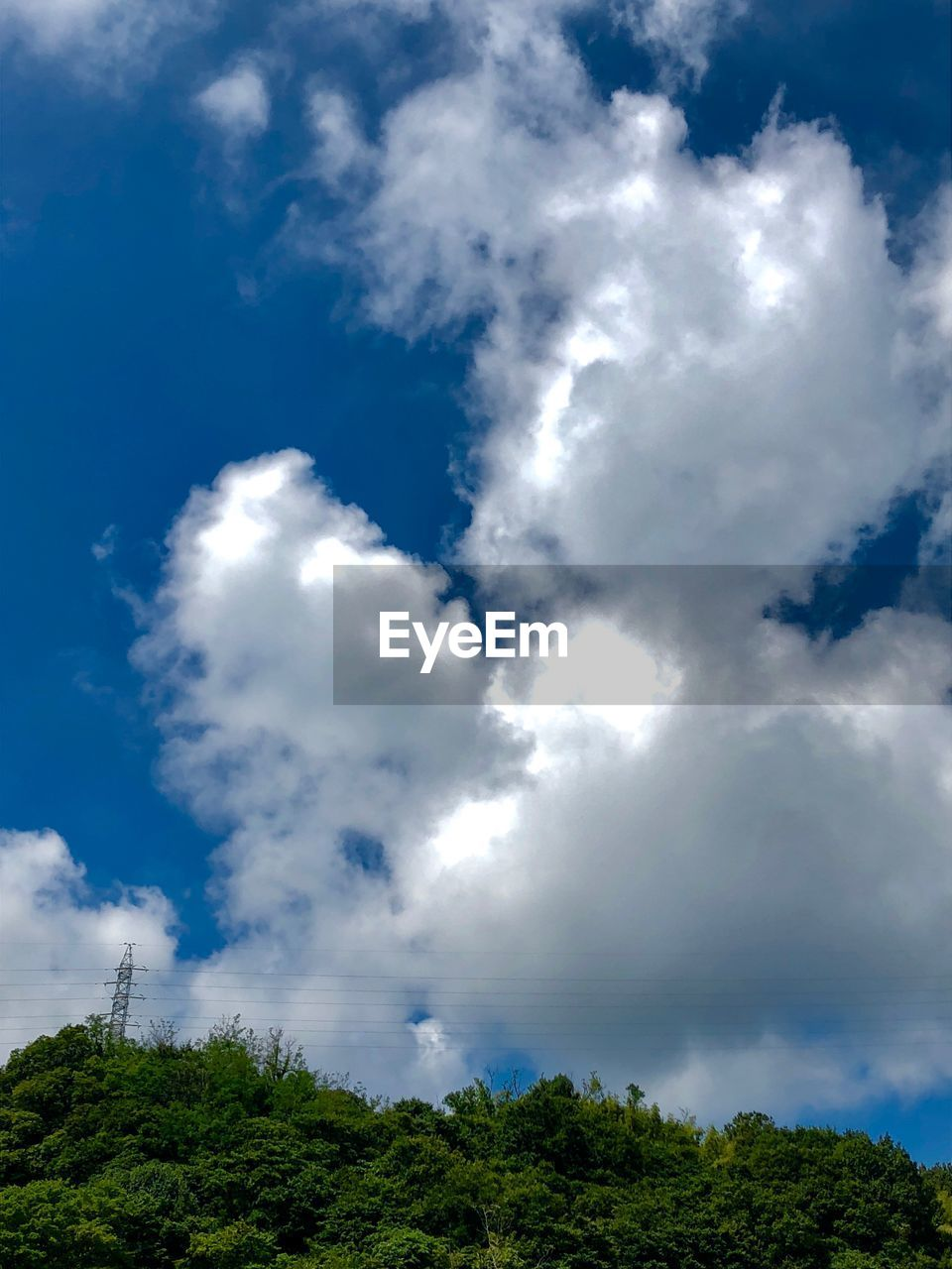 sky, cloud - sky, plant, tree, low angle view, beauty in nature, nature, tranquil scene, day, tranquility, growth, no people, scenics - nature, blue, green color, outdoors, non-urban scene, idyllic, sunlight, environment