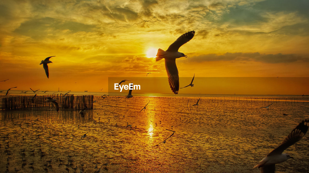 sunset, sky, water, beauty in nature, cloud - sky, sea, orange color, scenics - nature, nature, bird, silhouette, group of animals, animals in the wild, tranquil scene, flying, animal themes, animal wildlife, tranquility, animal, horizon over water, no people, sun