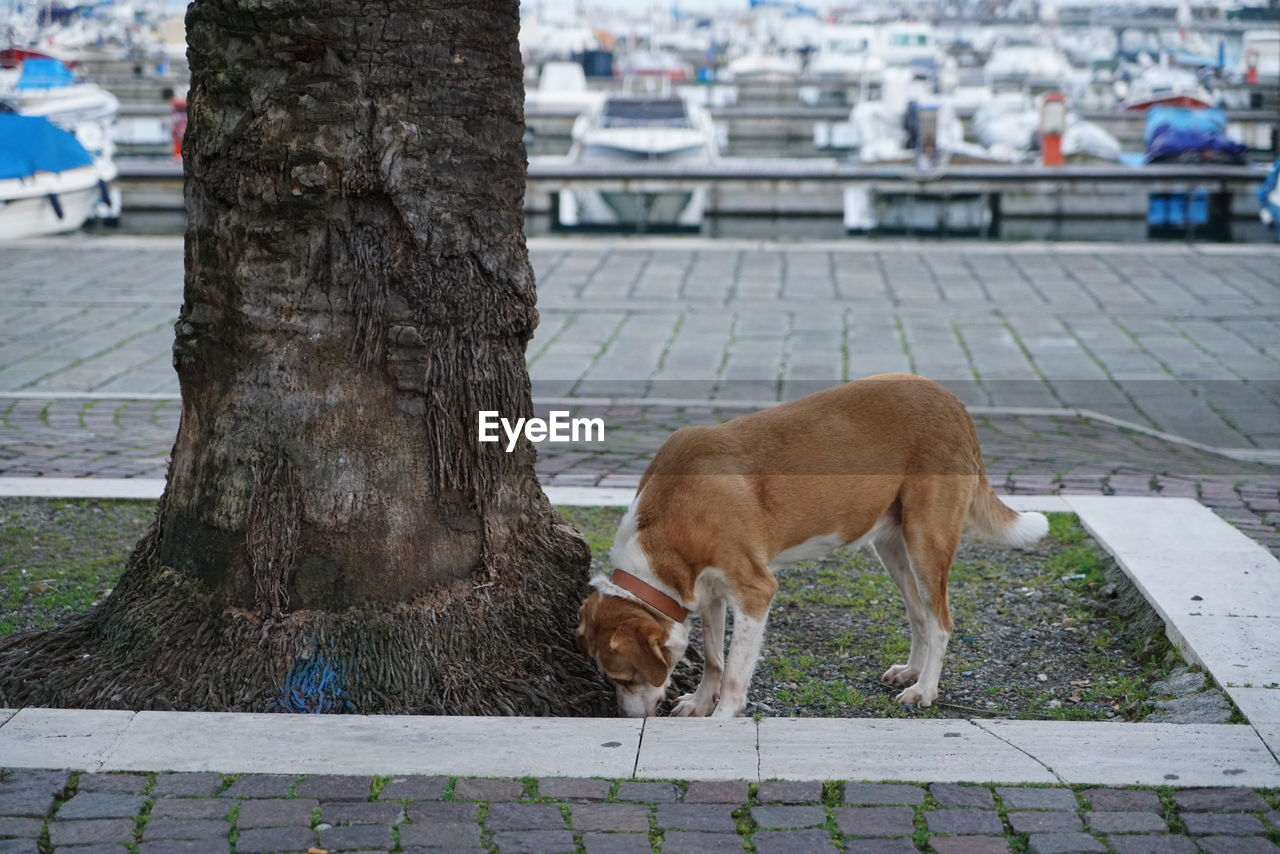 mammal, animal themes, one animal, trunk, animal, tree trunk, domestic animals, domestic, pets, vertebrate, dog, tree, canine, plant, day, footpath, architecture, no people, city, outdoors
