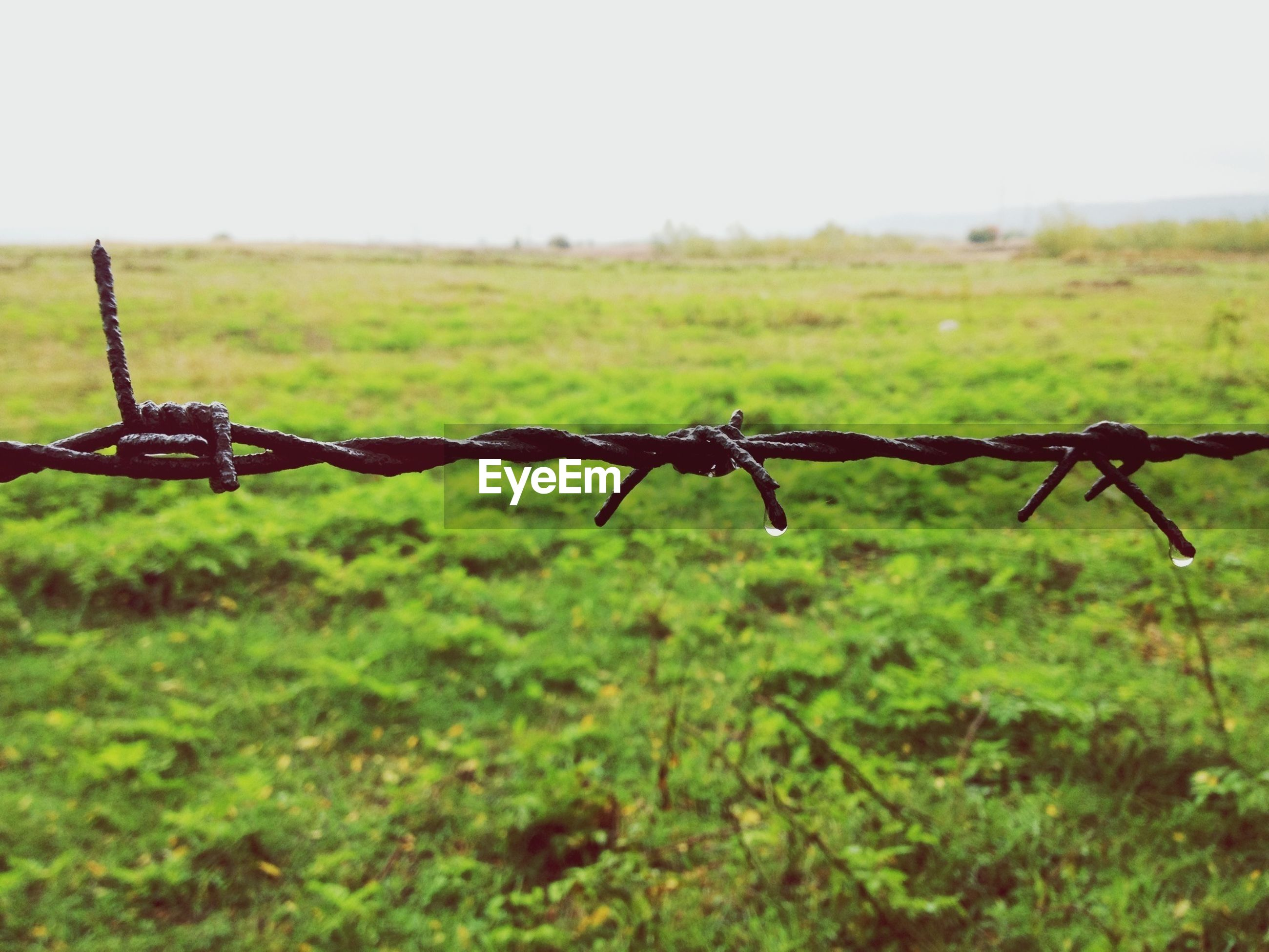 Close-up of barbed wire against grassland