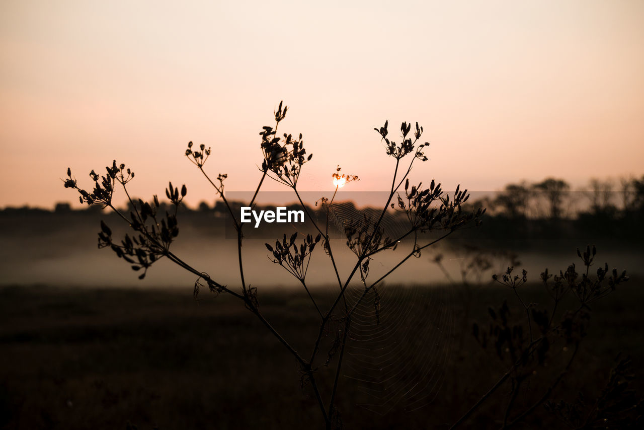sunset, beauty in nature, sky, tranquility, plant, tranquil scene, growth, scenics - nature, nature, focus on foreground, no people, non-urban scene, orange color, land, silhouette, outdoors, cloud - sky, field, close-up, plant stem