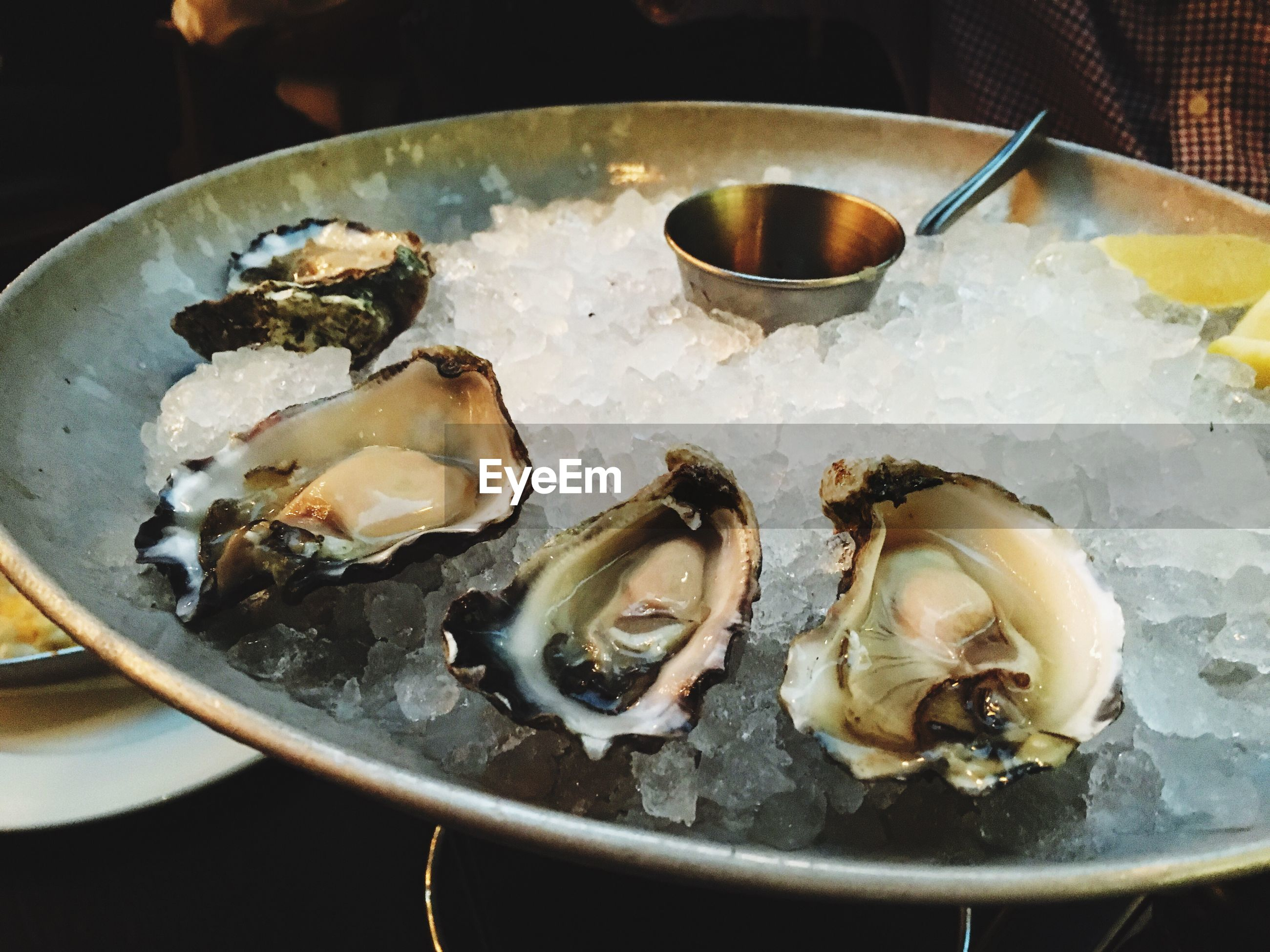 Close-up of oysters in plate