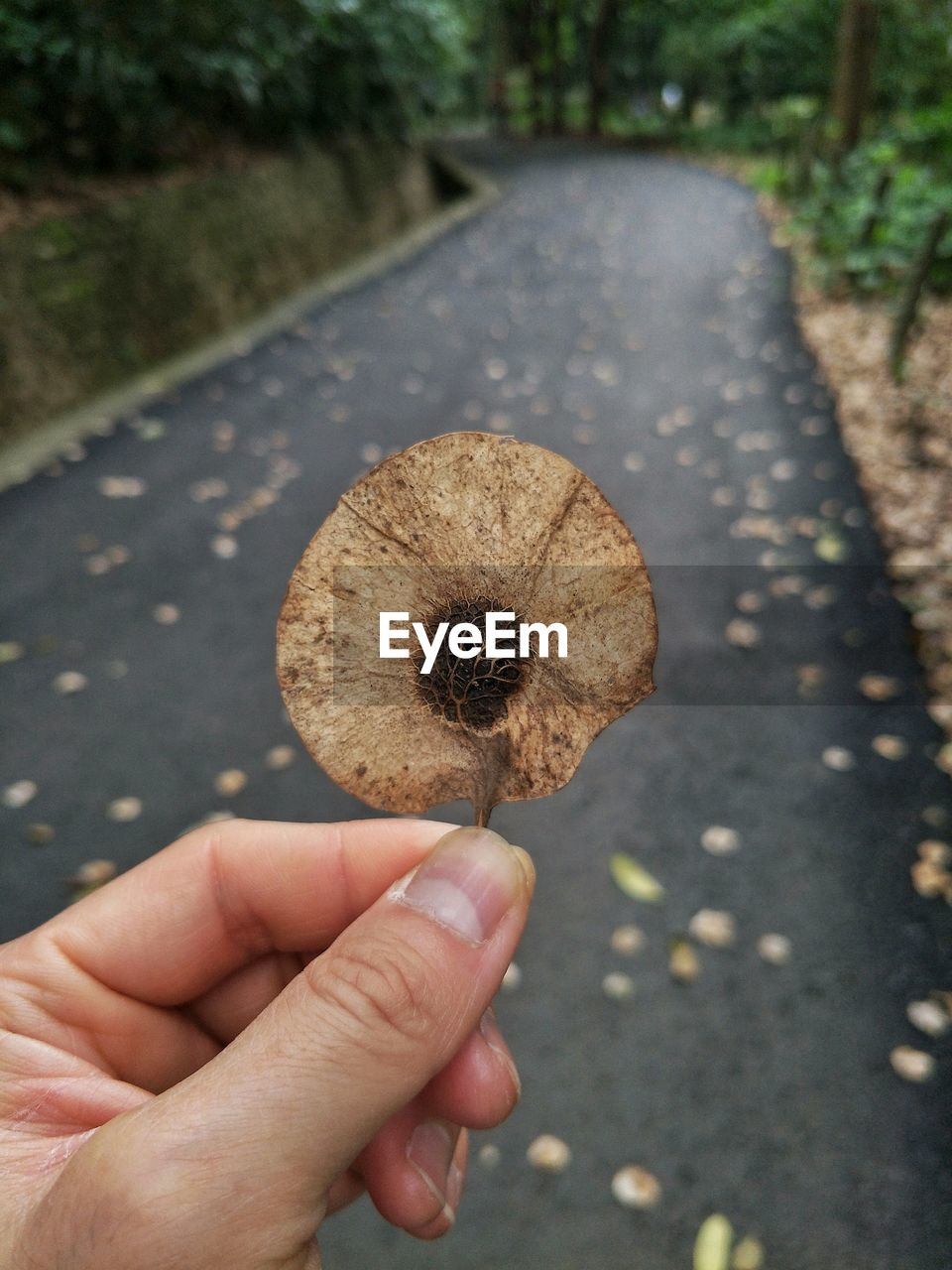 human hand, hand, human body part, one person, real people, holding, focus on foreground, day, personal perspective, unrecognizable person, road, close-up, finger, body part, human finger, lifestyles, plant, nature, food, outdoors, human limb