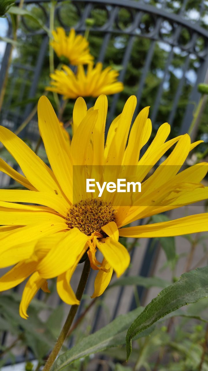 yellow, flower, growth, petal, nature, beauty in nature, fragility, plant, freshness, outdoors, flower head, day, close-up, no people, blooming