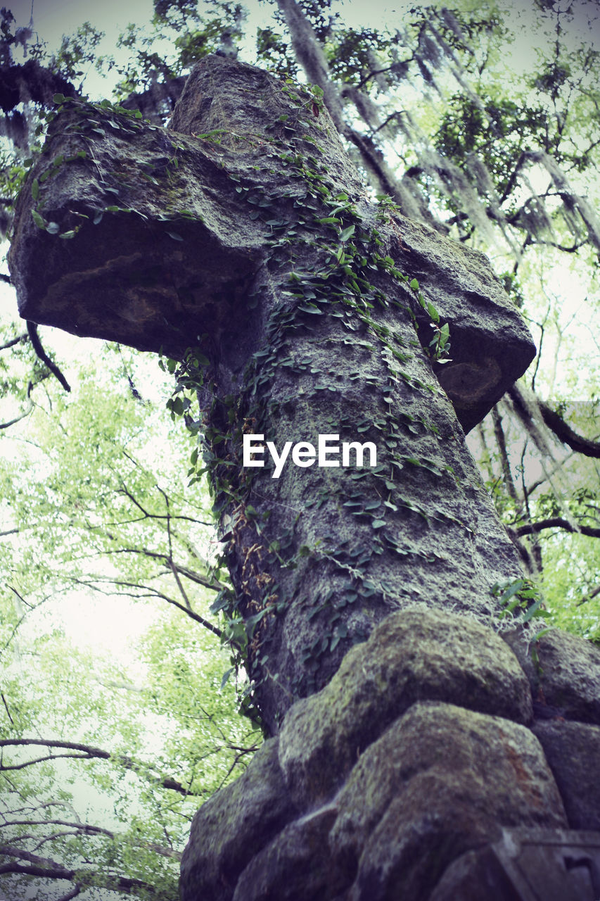 tree trunk, tree, nature, low angle view, no people, day, growth, forest, branch, outdoors, beauty in nature, close-up, mammal