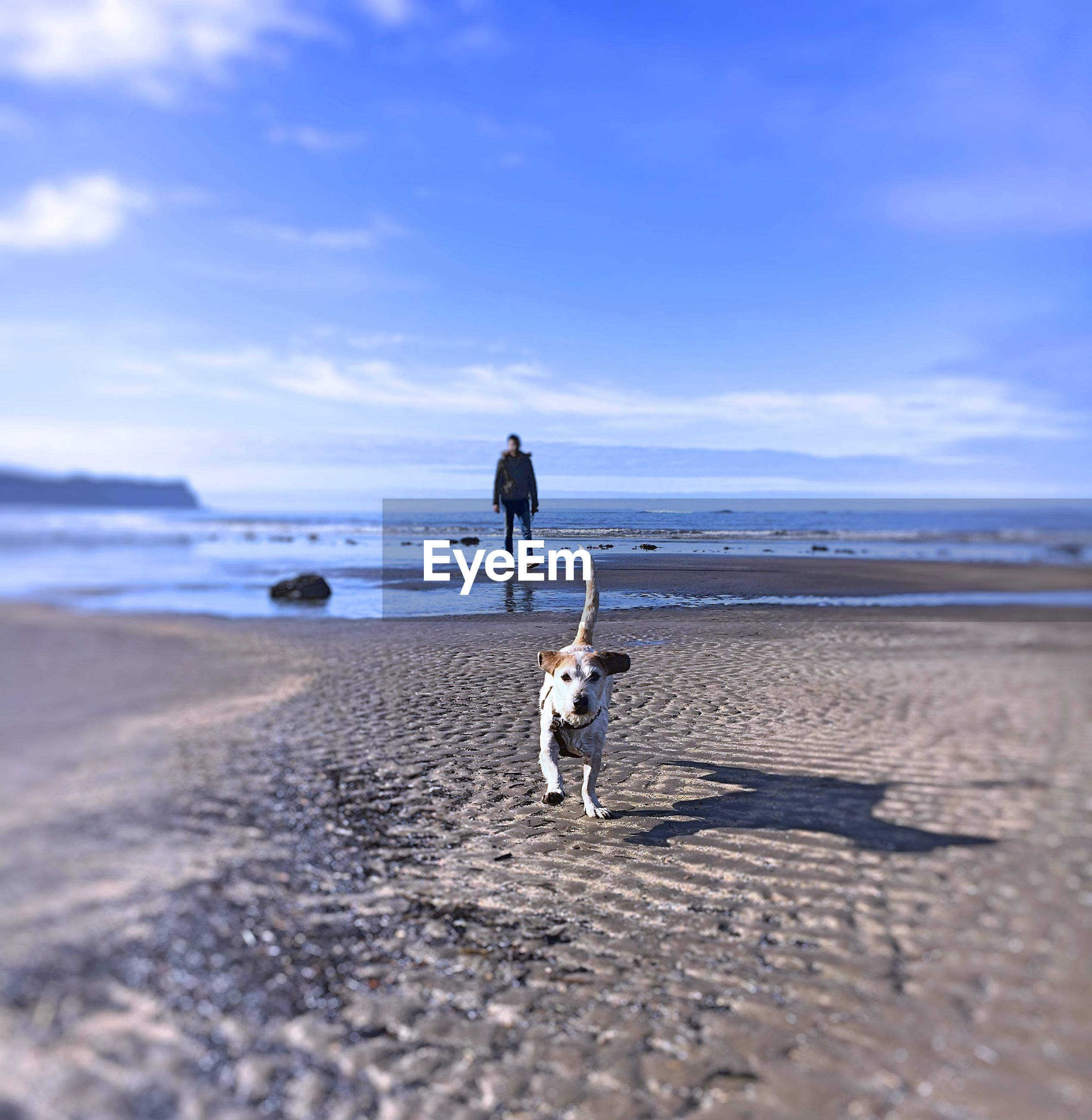 Dog walking at beach against sky