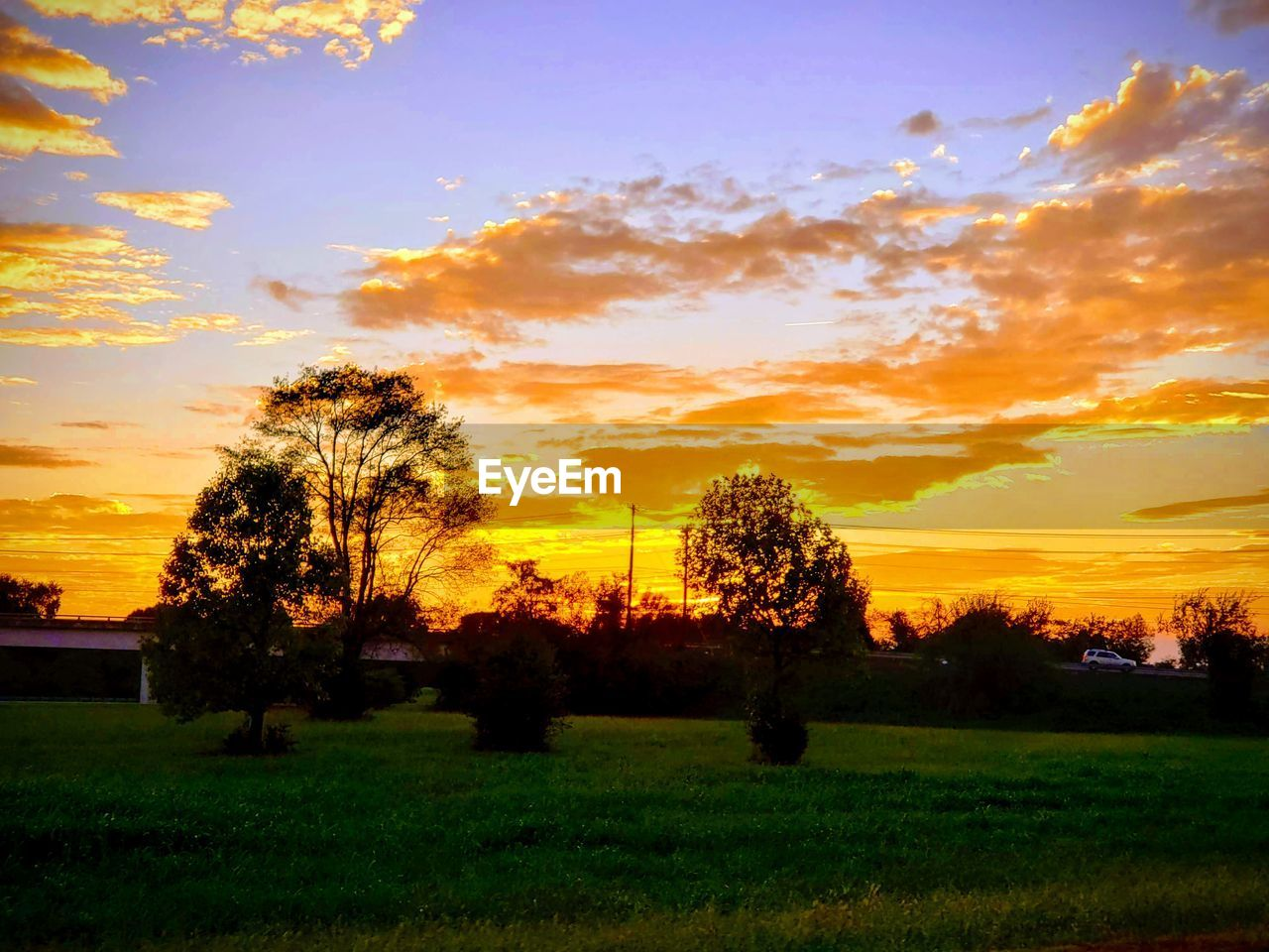 sunset, sky, plant, beauty in nature, scenics - nature, tree, tranquil scene, cloud - sky, orange color, field, landscape, tranquility, environment, land, grass, nature, no people, growth, idyllic, non-urban scene, outdoors