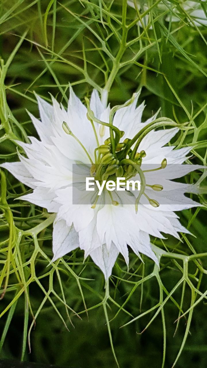 flower, growth, nature, plant, petal, white color, beauty in nature, blooming, flower head, fragility, spring, freshness, no people, outdoors, close-up, day
