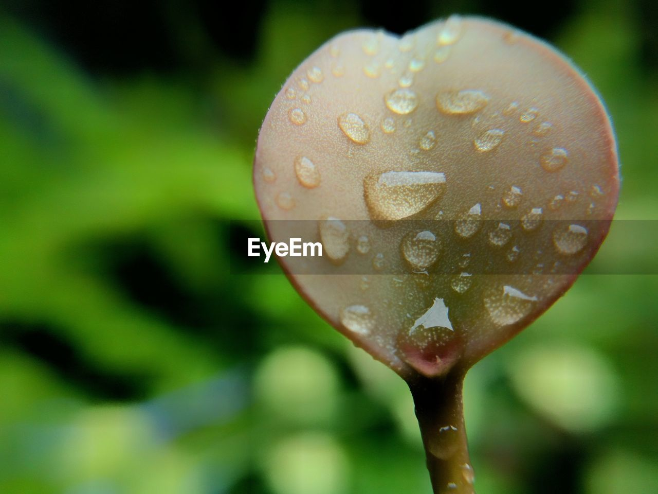 nature, drop, close-up, water, focus on foreground, beauty in nature, growth, wet, fragility, no people, freshness, outdoors, day, plant