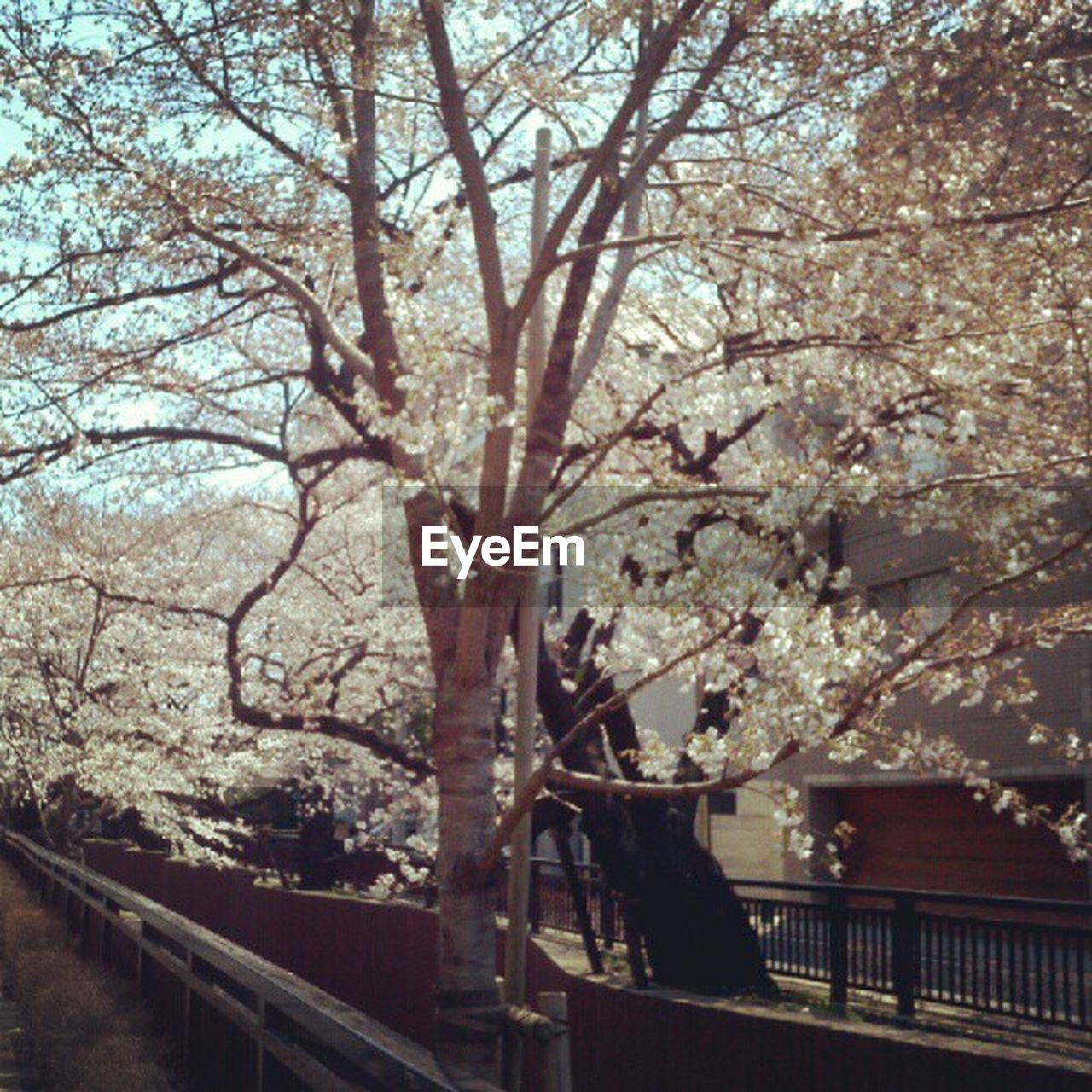 tree, railing, branch, architecture, flower, blossom, no people, steps and staircases, built structure, day, outdoors, springtime, building exterior, beauty in nature, nature, freshness, sky, close-up