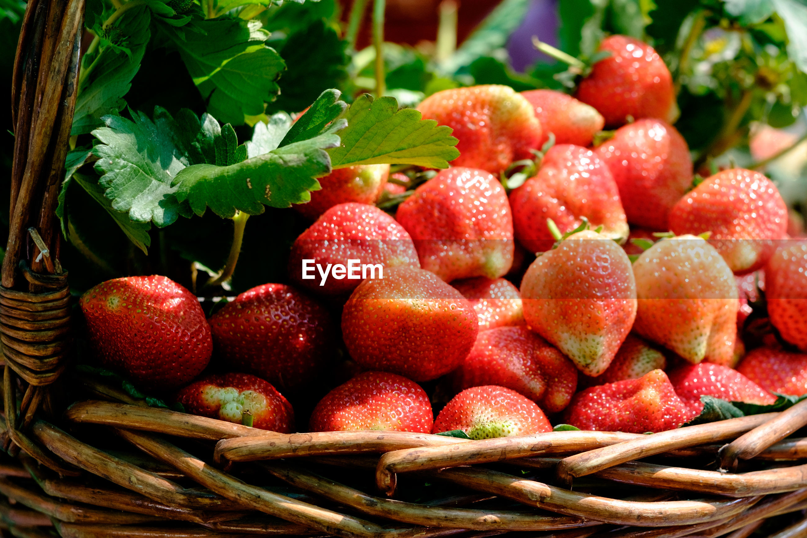 CLOSE-UP OF STRAWBERRIES IN BASKET OF RED BERRIES