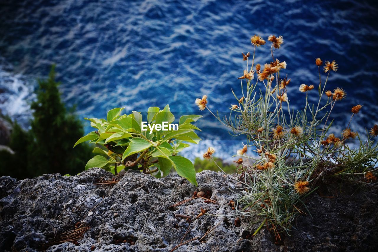 High Angle View Of Plants Growing By Rocks Against Sea